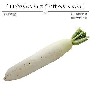蒜山大根 1本 岡山県真庭産 単品野菜
