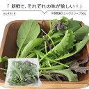 ミックスリーフ50g 単品野菜 岡山県真庭産 大塚農園