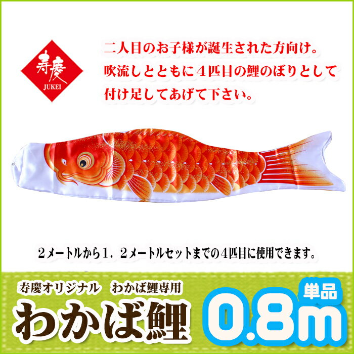 単品鯉 わかば鯉 黄色0.8m