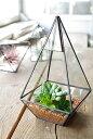 【テラリウム ガラス ケース ボックス フェイク グリーン 多肉 観葉植物 インテリア 雑貨 ギフト アンティーク調 アン…