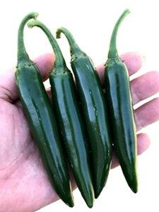 セラーノ 1000粒 唐辛子 とうがらし トウガラシ【フタバ 種 たね タネ】【通常6倍 5のつく日はポイント10倍 一万円以上の購入で4%OFFクーポン】