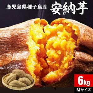 安納芋 さつまいも 種子島産 生芋 6kg 1箱 送料無料 M・Lサイズ混載 土付き 鹿児島産 安納いも サツマイモ 美味しい 美容 ギフト 焼き芋に