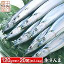 ご予約受付中 生さんま サンマの町女川より産地直送 たっぷり20尾 120g前後 約2.4kg 獲れたて三陸の秋味 生秋刀魚 さ…