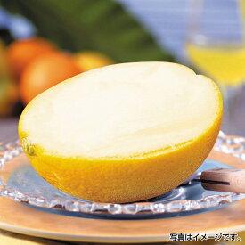 【同梱不可】はんぶんオレンジ 約60ml×40個/1ボール