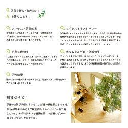 テーブルポットスプリットフィロ(光触媒より優れたCT触媒/SC触媒/インテリア/お祝い)【フェイクグリーン観葉植物人工】