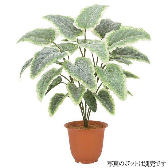 【人工観葉植物】フロストサルビアブッシュ 50cm 【観葉植物 造花 フェイクグリーン 光触媒 CT触媒 インテリア】[G-L]