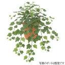 【観葉植物 造花】スモールアイビーブッシュ グリーン 38cm 【人工観葉植物 フェイクグリーン 光触媒 CT触媒 インテリ…