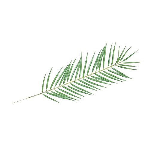 【フェイクグリーン】パームリーフ S 【人工観葉植物 観葉植物 造花 光触媒 CT触媒 インテリア】[G-L]