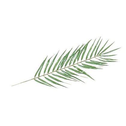 【フェイクグリーン】パームリーフ SS 【観葉植物 造花 人工観葉植物 光触媒 CT触媒 インテリア】[G-L]