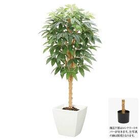 【人工観葉植物】パキラツリー S 150cm ナチュラルトランク 【フェイクグリーン 大型 観葉植物 造花 光触媒 CT触媒 インテリア】[G-L]