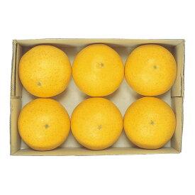 フロリダグレープフルーツ(6ヶ/パック) 食品サンプル[G-L]