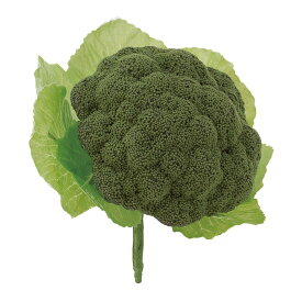 ブロッコリー(4ヶ/パック) 食品サンプル[G-L]