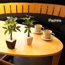 パキラ小鉢 ミニパキラ(光触媒より優れたCT触媒/SC触媒/インテリア/お祝い)【フェイクグリーン 観葉植物 人工】