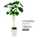 【フェイクグリーン大型】ウンベラータ180cm【観葉植物造花CT触媒光触媒人工観葉植物インテリアフェイクグリーン】