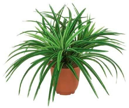 ドラセナブッシュ×3(グリーン/ホワイト)【観葉植物 造花 SC(CT)触媒・光触媒 フェイクグリーン】[G-L]鉢セット可能商品