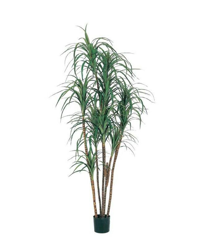 200cmドラセナツリー(ナチュラルトランク)【観葉植物 造花 CT触媒/光触媒 フェイクグリーン】[D-F]