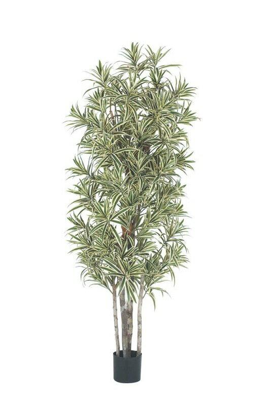 【送料無料】180cmドラセナリフレクサツリー(ナチュラルトランク)【観葉植物 造花 CT触媒/光触媒 フェイクグリーン】[D-F]