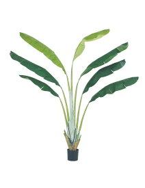 【フェイクグリーン 大型】トラベラーズパームツリー 250cm【観葉植物 造花 CT触媒/光触媒 フェイク グリーン】[D-F]