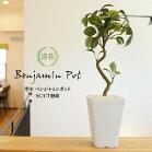 人工観葉植物観葉植物造花光触媒フェイクグリーン聖木ベンジャミンポット46cm鉢植フェイクグリーンインテリアおしゃれCT触媒お祝い