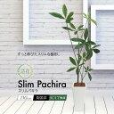 【観葉植物 造花】NEWスリムパキラ 110cm 鉢植【光触媒 インテリア フェイクグリーン 大型 人工観葉植物 フェイク グ…
