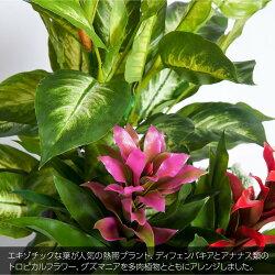 フェイクグリーンアナナストロピカルプランツ鉢植ディフェンバキア+グズマニア寄植【人工観葉植物造花光触媒SC/CT触媒フェイクグリーン】