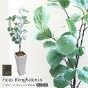 フェイクグリーン FIAN フィカス・ベンガレンシス 135cm 鉢植 トールポット&下皿セット 人工観葉植物 大型 光触媒 CT…