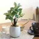 【父の日 プレゼント】フェイクグリーン ミニ 観葉植物 レモンツリーポット テーブル 28cm【フェイク グリーン 造花 …
