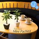 フェイクグリーン 観葉植物 造花 ミニ 人工観葉植物 光触媒 パキラ 小鉢 26cm インテリア おしゃれ フェイク グリーン…