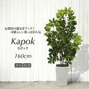 人工観葉植物 フェイクグリーン 観葉植物 造花 光触媒 大型 シェフレラ ナチュラルカポックツリー 160cm 鉢植 斑入り …