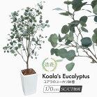 コアラのユーカリ170cm鉢植フェイクグリーンインテリアおしゃれCT触媒お祝い