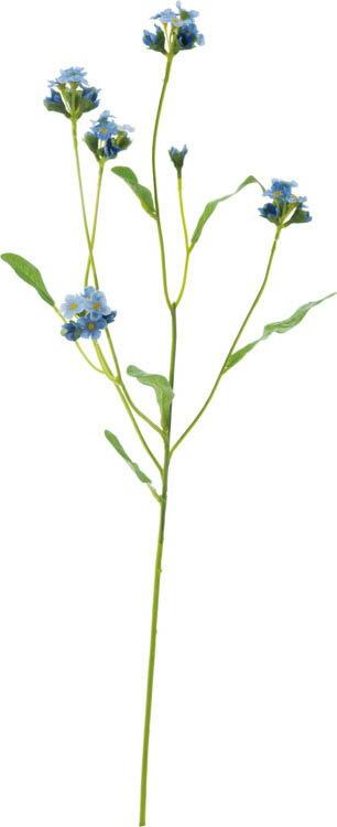 ワスレナグサ ブルー