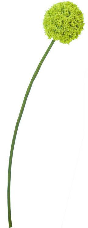 アリウム グリーン