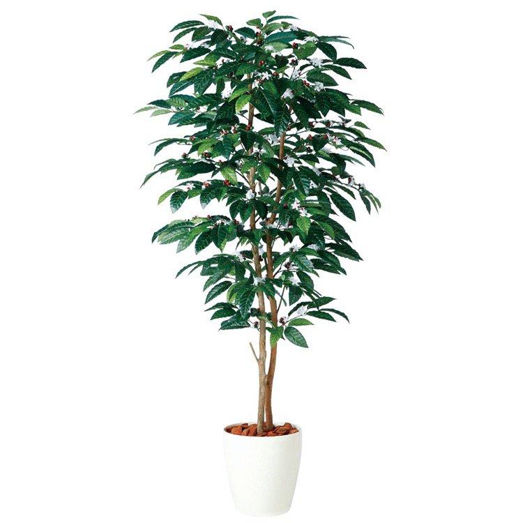 【フェイクグリーン 大型】 コーヒーデュアル (コーヒーの木) 180cm 鉢植 【人工観葉植物 観葉植物 造花 光触媒 CT触媒 インテリア】