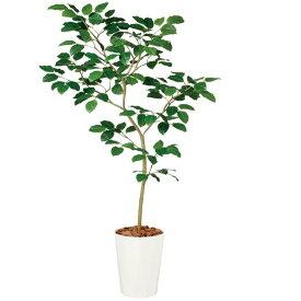 【観葉植物 造花 大型】 ベンガルボダイジュ FST 180cm 鉢植 【人工観葉植物 フェイクグリーン 光触媒 CT触媒 インテリア】