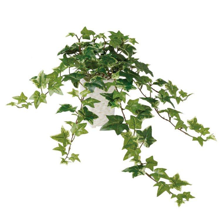 【人工観葉植物】 セージアイビー 60cm 鉢植 【フェイクグリーン 観葉植物 造花 光触媒 CT触媒 インテリア】