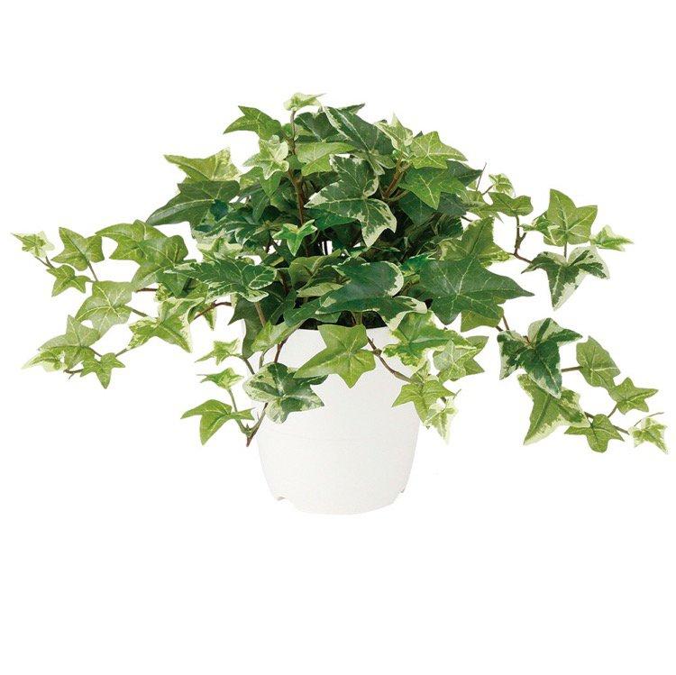 【人工観葉植物】 セージアイビー 30cm 【観葉植物 造花 フェイクグリーン 光触媒 CT触媒 インテリア】