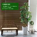 フェイクグリーン カポック シェフレラ(フイリ) 180cm(人工観葉植物 光触媒対応 インテリア リアル)