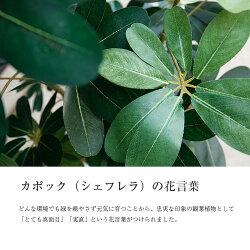 カポックツリー(SC触媒加工済み)【CT触媒】【人工樹木】【造花】