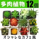 観葉植物 フェイクグリーン サボテン・多肉植物を含む12個セット 送料無料 吊り下げ、壁掛け mini
