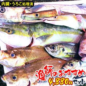 【漁師激選】鮮魚 詰め合わせ 鮮魚ボックス 魚 詰め合わせ 鮮魚 おまかせ 福袋 鮮魚 下処理済み 刺身 さしみ 取り寄せ お取り寄せ 鮮魚 直送 鮮魚セット おいしい 美味しい 海鮮 詰め合わせ