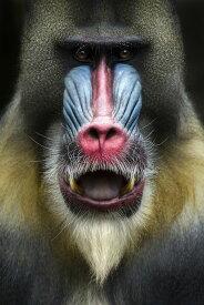 アートパネル 10cm単位でサイズオーダーできる 絵画 壁掛け インテリア 壁飾り キャンバス アート ウォール 動物 アニマル 猿 サル さる e22988