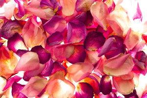 自然 花 フラワー フローラルの壁紙 輸入 カスタム壁紙 PHOTOWALL / Bed of Rose Petals (e19880) 貼ってはがせるフリース壁紙(不織布) 【海外取り寄せのため1カ月程度でお届け】 【代引き・後払い不可