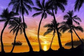 自然 空 スカイの壁紙 輸入 カスタム壁紙 photowall / Palm Beach Sundown (e21687) 貼ってはがせるフリース壁紙(不織布) 【海外取り寄せのため1カ月程度でお届け】 【代引き不可】