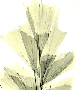 花 フラワー フローラルの壁紙 輸入 カスタム壁紙 PHOTOWALL / Fish Tail Palm (e21799) 貼ってはがせるフリース壁紙(不織布) 【海外取り寄せのため1カ月程度でお届け】 【代引き・後払い不可】