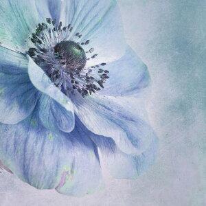 自然 花 フラワー フローラルの壁紙 輸入 カスタム壁紙 PHOTOWALL / Beautiful Flower (e22501) 貼ってはがせるフリース壁紙(不織布) 【海外取り寄せのため1カ月程度でお届け】 【代引き・後払い不可】