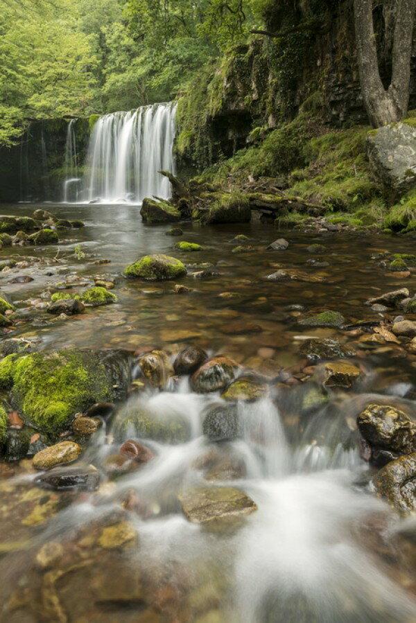 自然 森の壁紙輸入 カスタム壁紙 PHOTOWALL / Clear Water Stream (e23657)貼ってはがせるフリース壁紙(不織布)【海外取り寄せのため1カ月程度でお届け】【代引き不可】.