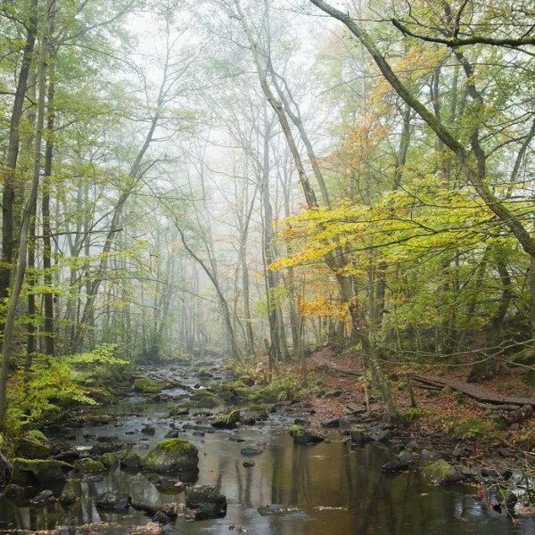風景 景色 自然の壁紙輸入 カスタム壁紙 PHOTOWALL / Stream in Swedish Beech Forest I (e40490)貼ってはがせるフリース壁紙(不織布)【海外取り寄せのため1カ月程度でお届け】【代引き不可】