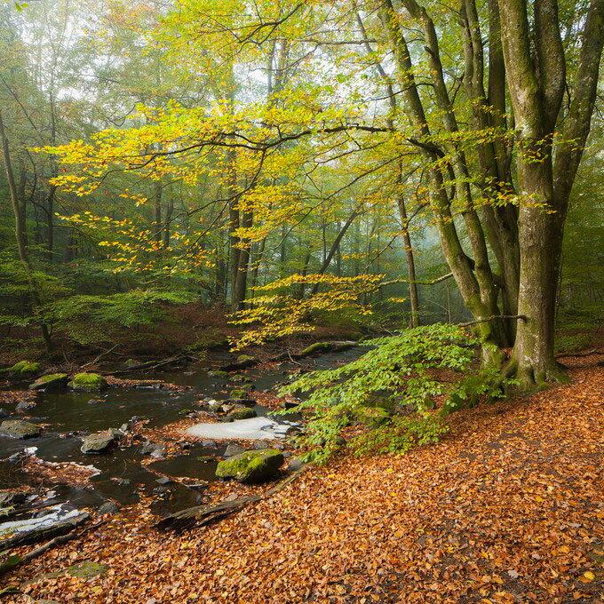 風景 景色 自然の壁紙輸入 カスタム壁紙 PHOTOWALL / Stream in Swedish Beech Forest II (e40491)貼ってはがせるフリース壁紙(不織布)【海外取り寄せのため1カ月程度でお届け】【代引き不可】