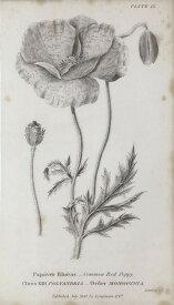自然 ビンテージ ヴィンテージの壁紙 輸入 カスタム壁紙 PHOTOWALL / Botanical Chart - Common Red Poppy (e50062) 貼ってはがせるフリース壁紙(不織布) 【海外取り寄せのため1カ月程度でお届け】 【代引き不可】 壁紙屋本舗