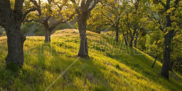 風景 景色 自然の壁紙輸入 カスタム壁紙 PHOTOWALL / Late Afternoon Sunshine Streams, Mount Diablo, California (e31115)貼ってはがせるフリース壁紙(不織布)【海外取り寄せのため1カ月程度でお届け】【代引き不可】